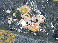"""Smashed Egg"" by nicasaurusrex, on Flickr"