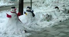 snowpanda.png