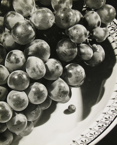 Rossler, Grapes