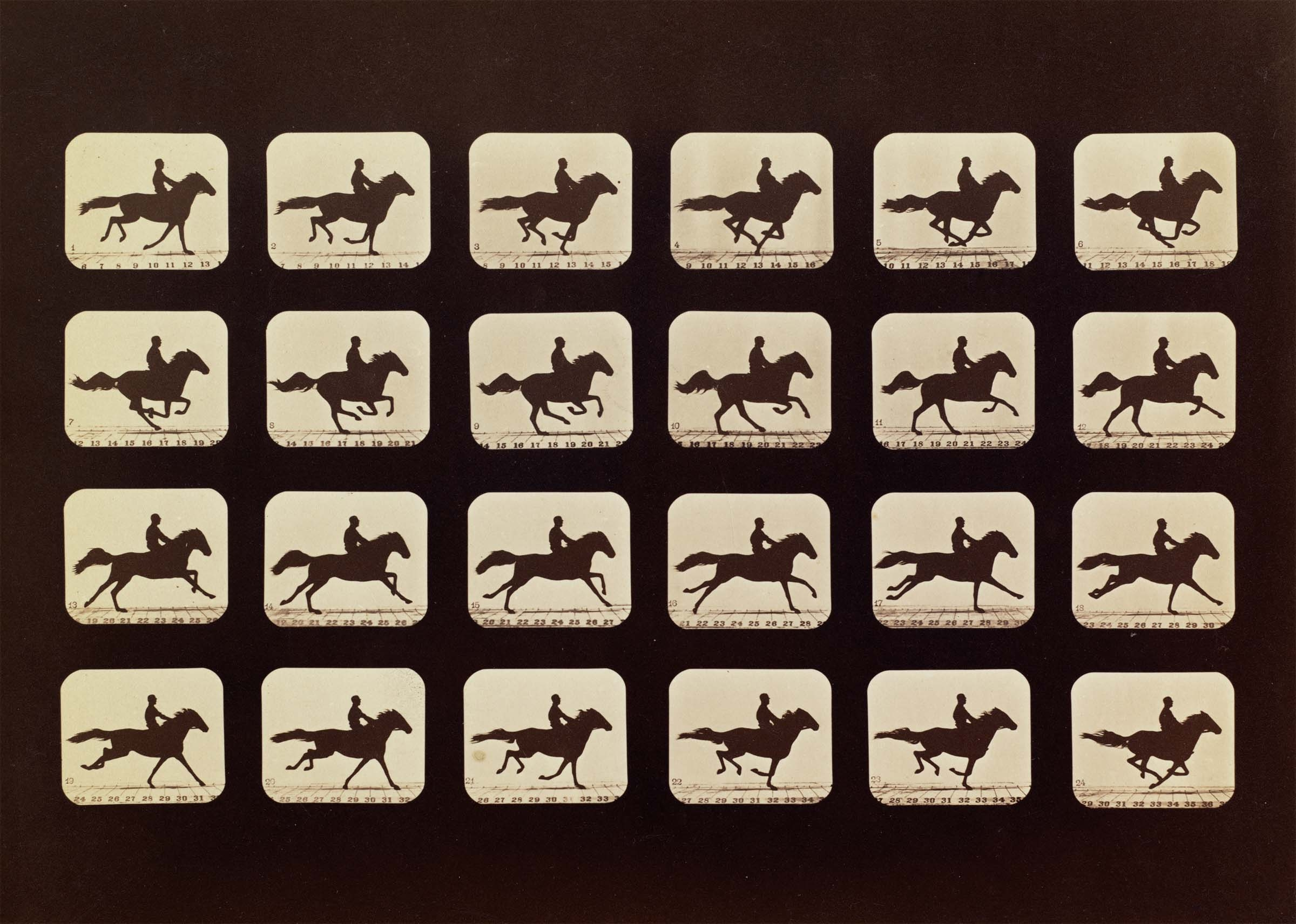 14 Horses. Running. Phryne L. Plate 40, 1879, from The Attitudes of Animals in Motion